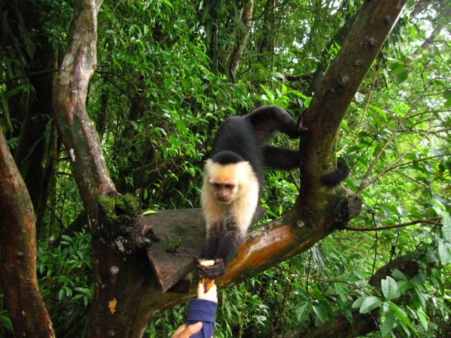 Cedro and Capuchin