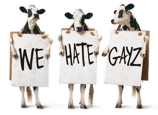 HOMOPHOBIC COWS
